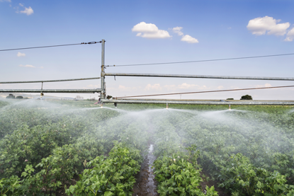 Irrigation of Cotton crops